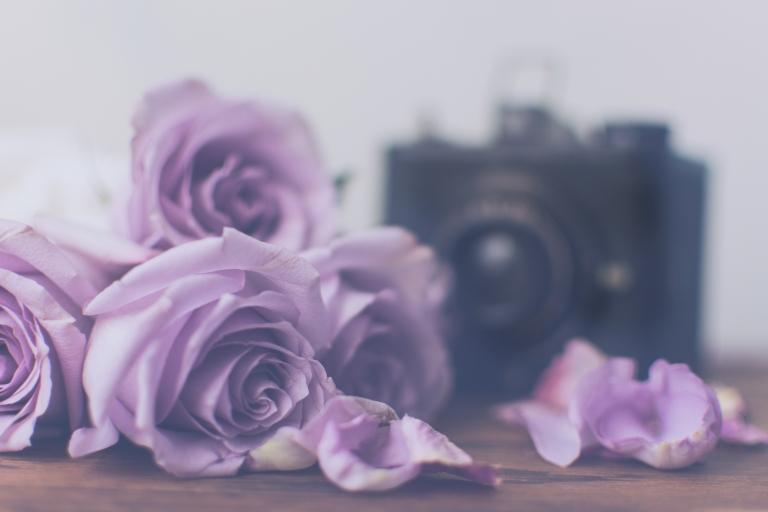 btl_purple.roses.camera_orchid.tints