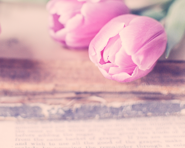 gfancy_btl_pinktulips.books.close-up