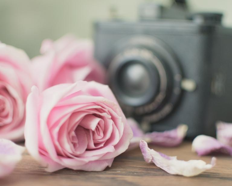 gfancy_pink.roses.camera_kkhazydazy
