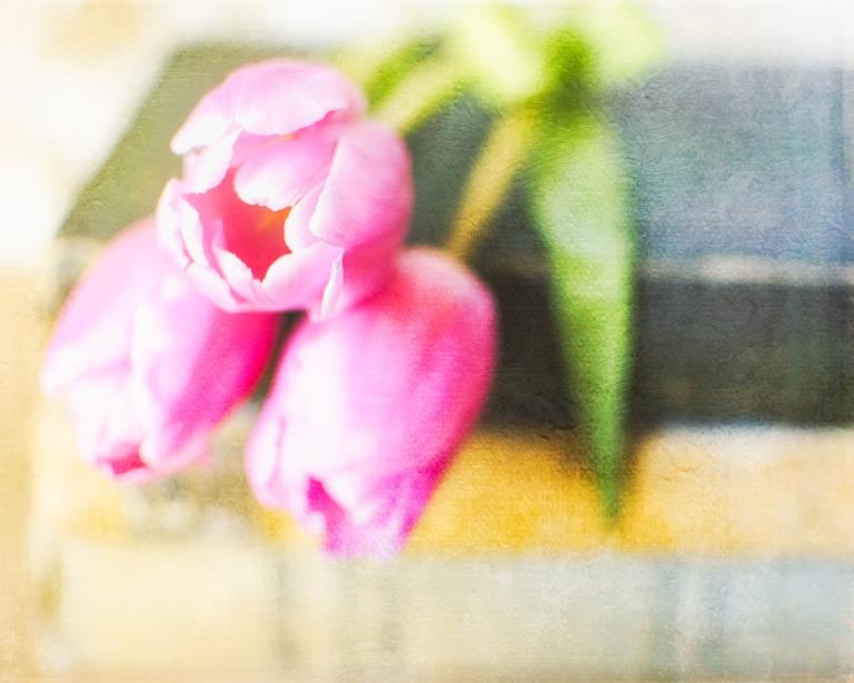 gfancy_tulips.books_topaz.oldmasters