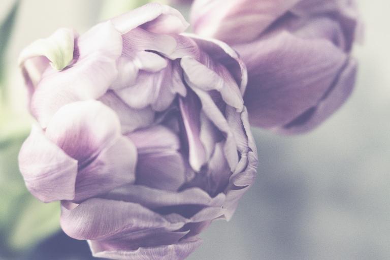 lb_crystal_purple.tulips.macro