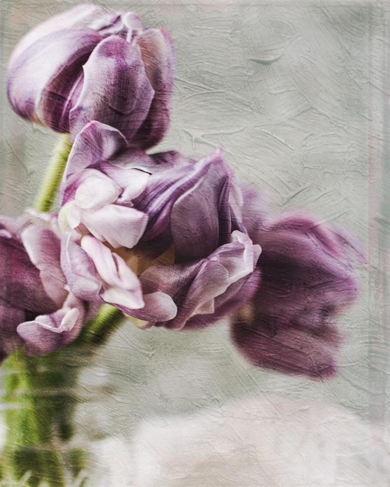 lb_crystal_purple.tulips_old.masters