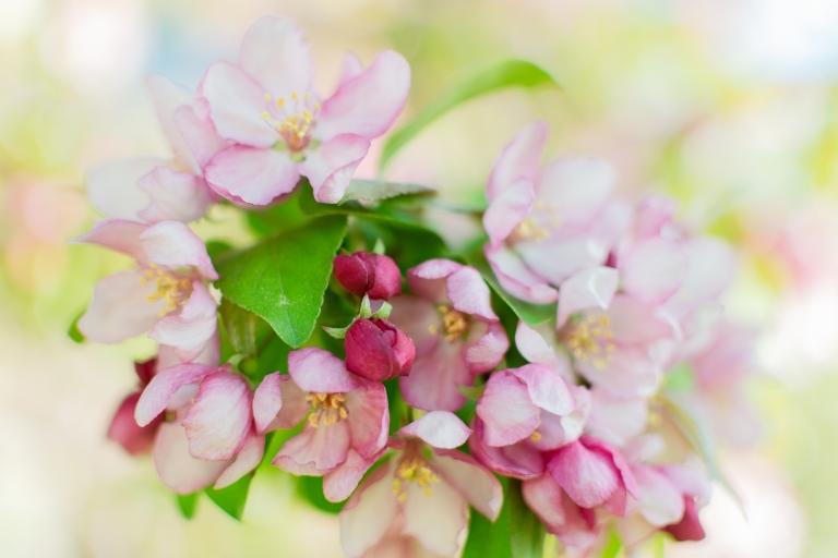 btl_crystal_crab.blossoms3