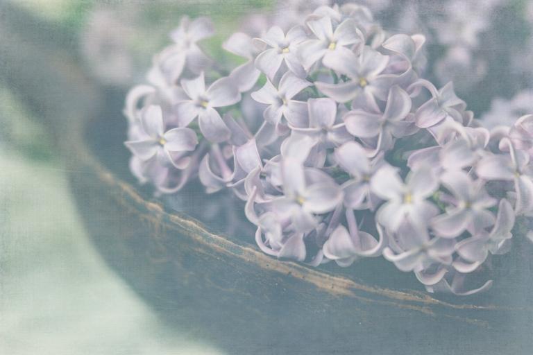 btl_crystal_lilacs.spoon_chalky