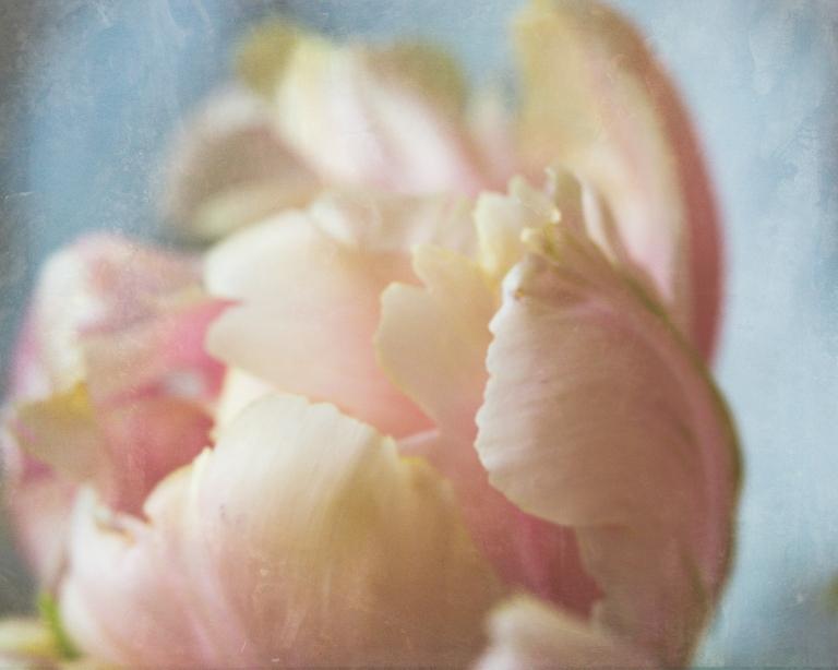 btl_crystal_rose.tulip_macro_luxe