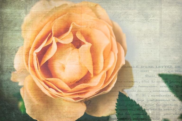lb_crystal_peach.rose_fr.brocante8