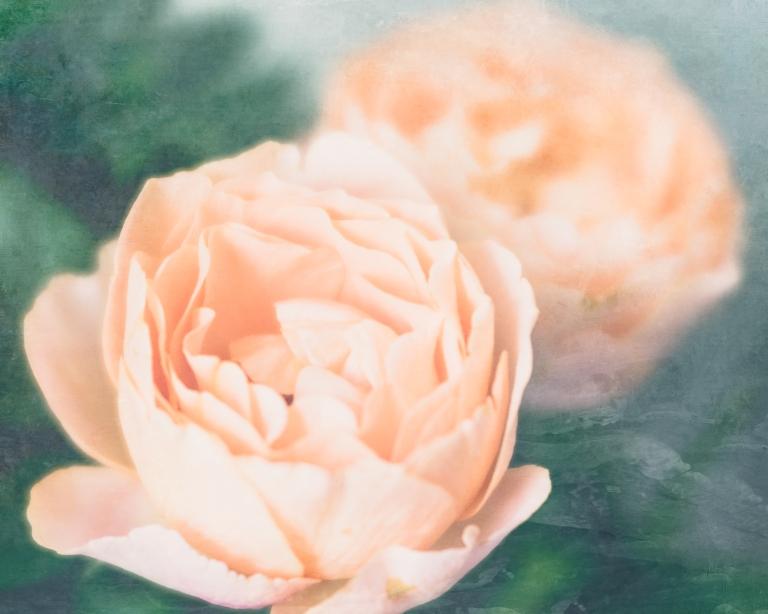 lb_crystal_peach.roses.macro_paint.luxe