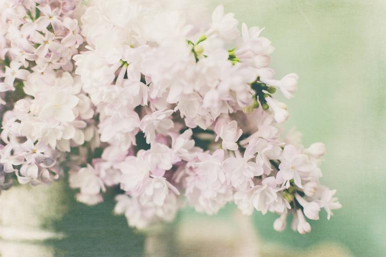 btl_crystal_lilacs.pink.sifter_chalky