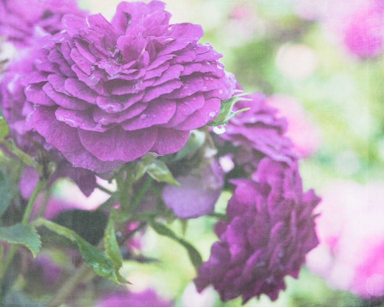lb_crystal_purple.rose.bokeh_rough.luxe