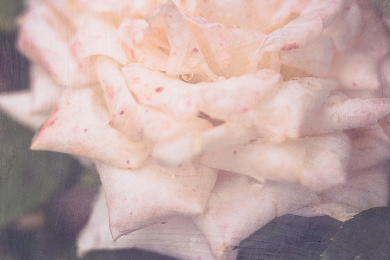 lb_crystal_rose.freckled_beautllight