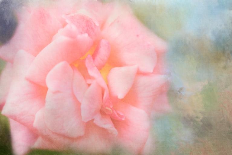 lb_arb.pink.rose_dt.spring