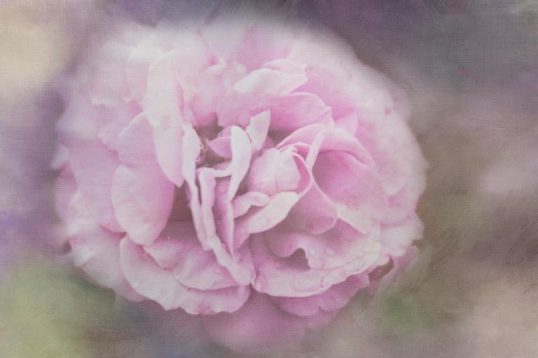 lb_arb_laven,rose_dt.laven.del.paints