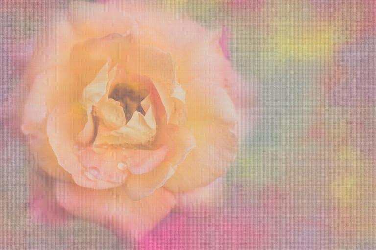 lb_arb_peachy.pink.rose_dt.floral