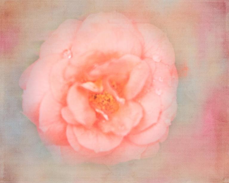 lb_arb_rosy.rose_dt.floral