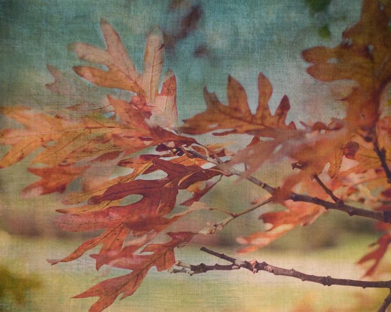 btl_crystal_leaves_november.sky