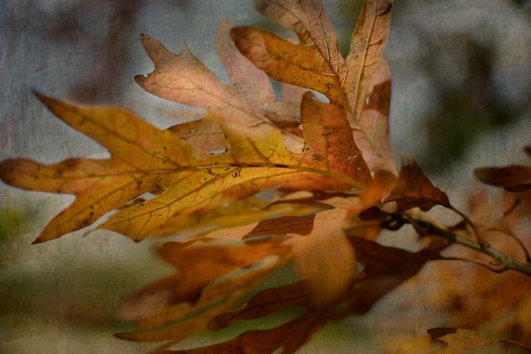 btl_crystal_leaves_painterly.tuesday