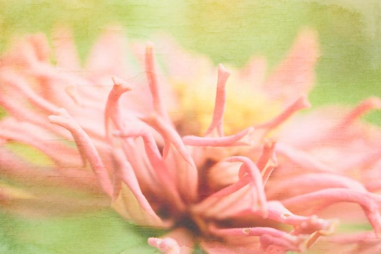 lb_crystal_zinnia.pink.angle_inspired